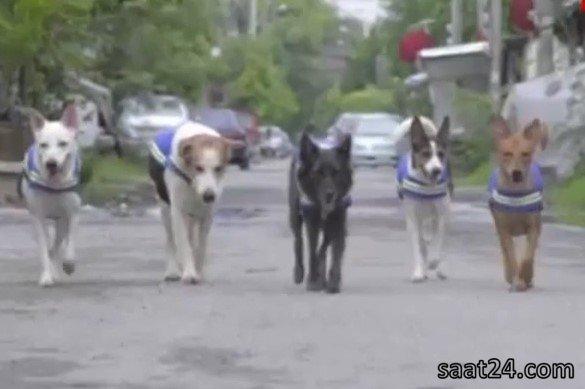 سگ های نگهبان در تایلند