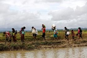 آوارگان روهینگای در مرز بنگلادش و میانمار