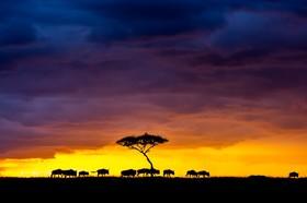 پارک حیات وحش ماسایی در کنیا