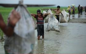 آوارگان مسلمان روهینگای در حال حرکت به سوی مرز بنگلادش