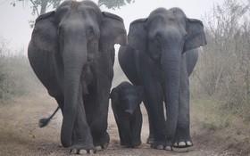 اختصاص منطقه ای در هند برای حفاظت از فیل ها