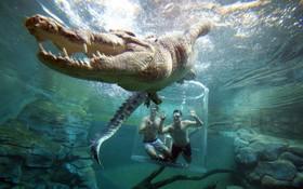 جهانگردان در بشکه ای شیشه ای در سواحل داروین در استرالیا کروکودیل عظمی را از نزدیک می بینند