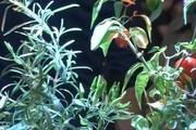 پرورش سبزیجات در باغچه خودکار برای همه ممکن می شود