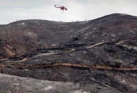 باقیمانده پس از آتش سوزی در منطقه ای جنگلی در کالیفرنیا