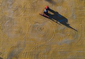 خشک کردن بلغور در قاضین تپه در ترکیه