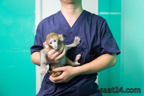 (تصاویر)حیوانات خانگی عجیب در چین