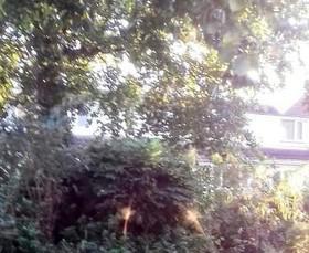 مشاهده موجودی عجیب در جنگل های انگلیس + تصاویر