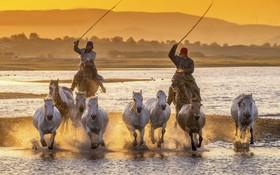 پرورش دهندگان اسب در مناطق قبیله نشین ایغور در چین