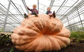 پرورش کدوتنبل بزرگ توسط دوبرادر در انگلیس با روزانه 370 لیتر آب