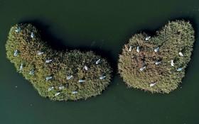 مرغ های دریایی در دریای آگین در ازمیر ترکیه