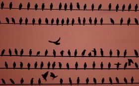 پرندگان بر سیم برق در شهرکانزاس در آمریکا