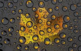 باران پاییزی و برگی آنسوی شیشه
