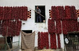 خشک کردن فلفل در صربستان