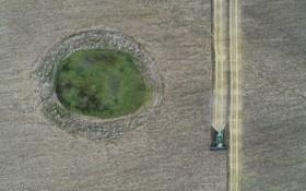 درو گندم در مزرعه ای در سیبری روسیه