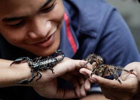 حیوانات خاگی جوان فیلیپینی
