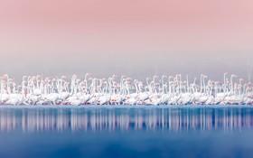 فلامینگوهای صورتی در دریاچه بوگوریا در کنیا