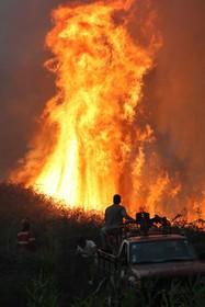 تلاش آتش نشانان برای خاموش کردن آتش در جنگل های منطقه پومبال در پرتغال