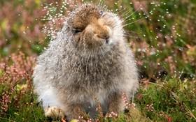 خرگوش خیس