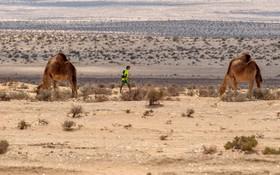 مسابقه ماراتن در تونس