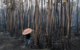 منطقه جنگلی سوخته در آتش سوزی در منطقه گالاسیا در اسپانیا