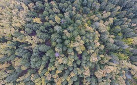 منظره ای پاییزی در ترکیه