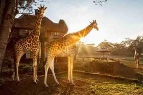 7 هتل در قلمروی حیوانات + عکس