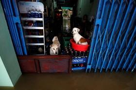 سیل در شهر هوشی مین در ویتنام و پناه گرفتن س