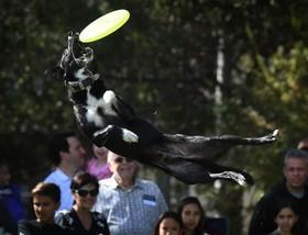 نمایش سگ های تربیت شده در آمریکا