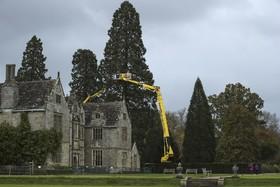 تزئئین و آماده سازی یکه درخت کاج در انگلیس به ارتفاع سی وشش متر برای کریسمس