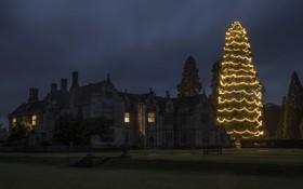 تزیین درخت کاج در یک بنای قدیمی برای سال نو میلادی