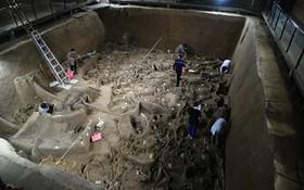 چهار ارابه اسبی قدیمی که مربوط به دو هزار سال قبل بوده است در ایالت هنان در چین کشف شده است