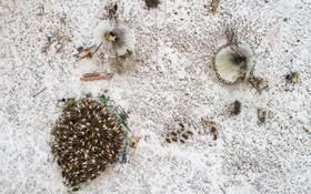 تصویری از چادرنشینان کوچ رو در منطقه سیبری در روسیه که گوزن پرورش می دهند