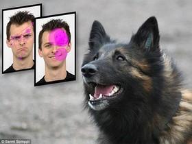 چرا سگها به چهرههای خندان علاقمند هستند؟+تصاویر