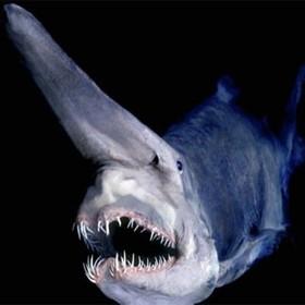 (تصاویر) موجودات عجیب  و وحشت ناک دریایی :کوسه غواص