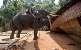 استفادهاز فیل ها برای تخریب خانه و بنا در هند