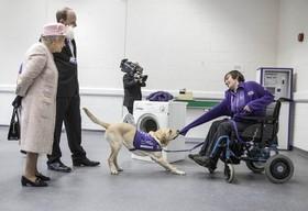 دیدار ملکه انگلیس از مرکز خیریه ای که در آن یک سگ به فرد معلولی برای تغویض لباس کمک می کند
