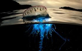 (تصاویر) صحنه های دیدنی از موجودات اعماق دریا