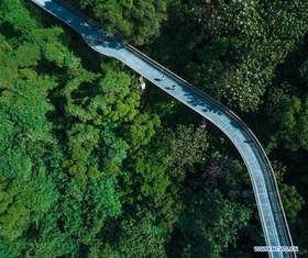 راه هوایی در میان جنگل
