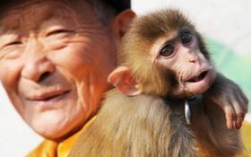 میمون آموزش دیده در حال اجرای خیابانی در چین