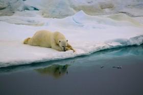 (تصاویر) عکس هایی جالب و دیدنی از طبیعت و زندگی