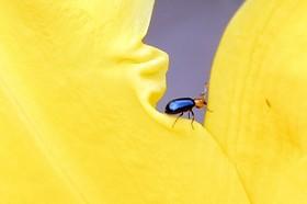 (تصاویر) عکس های برگزیده و دیدنی از طبیعت