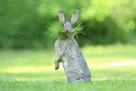 (تصاویر)عکس های خنده دار و دیدنی از حیوانات