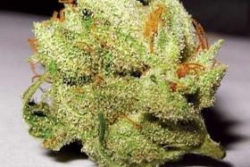 همه چیز درباره ماده مخدر «گُل»