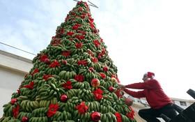 ساخت تزئینات سال نو شبیه درخت کریسمس با موز در لبنان بیروت