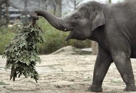 فیل باغ وحشی در آلمان