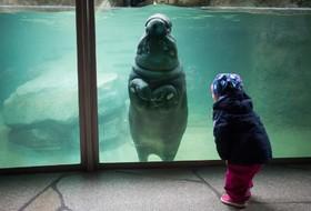 اسب آبی در باغ وحشی در آلمان