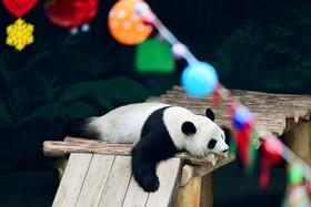 باغ وحشی در چین با تزئین های سال نو