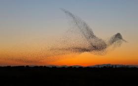 شکل عجیبی که چلچله ها در آسمان ساخته اند و عکاسی با صرف وقت فراوانن ثبت کرده است
