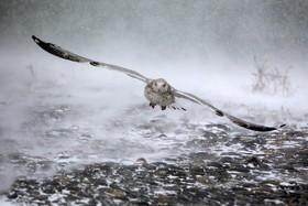 مرغ دریایی در میان توفان شدید در حال پرواز