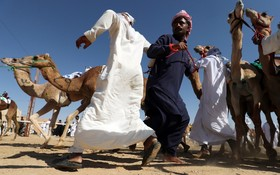 مسابقه شترسواری در ابوظبی